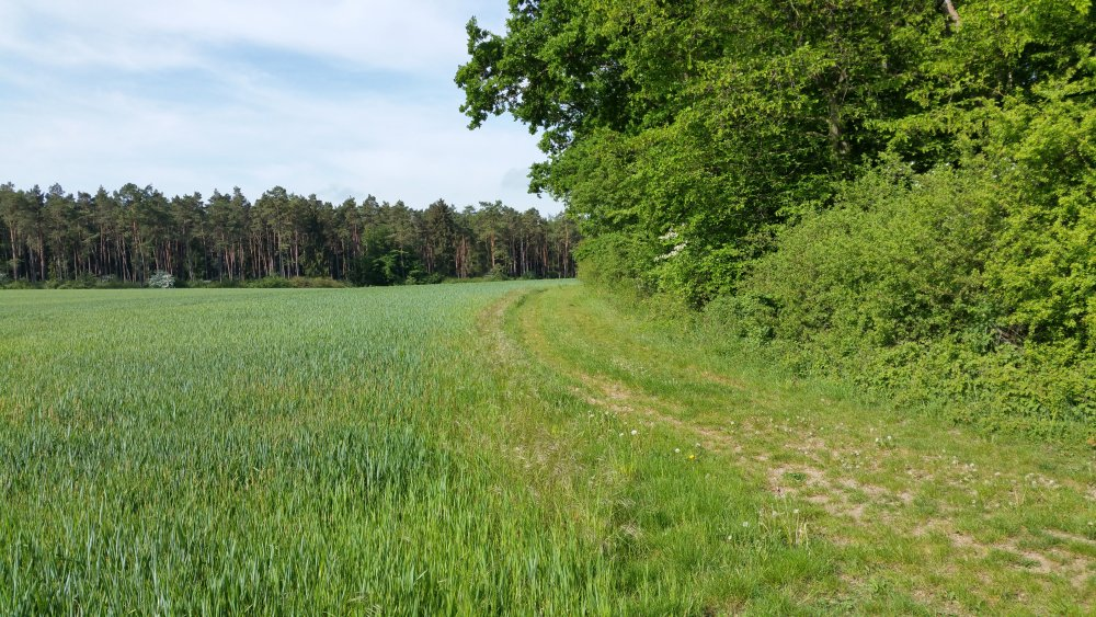 Welda - Iberg